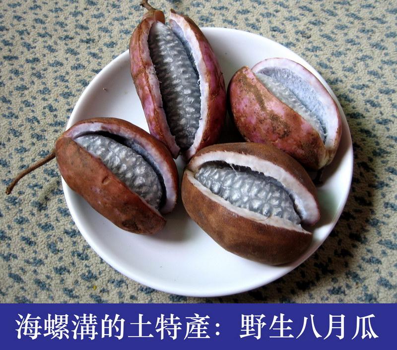 海螺沟的土特产系列:八月瓜 - 海螺沟视觉地理 - 友 ...